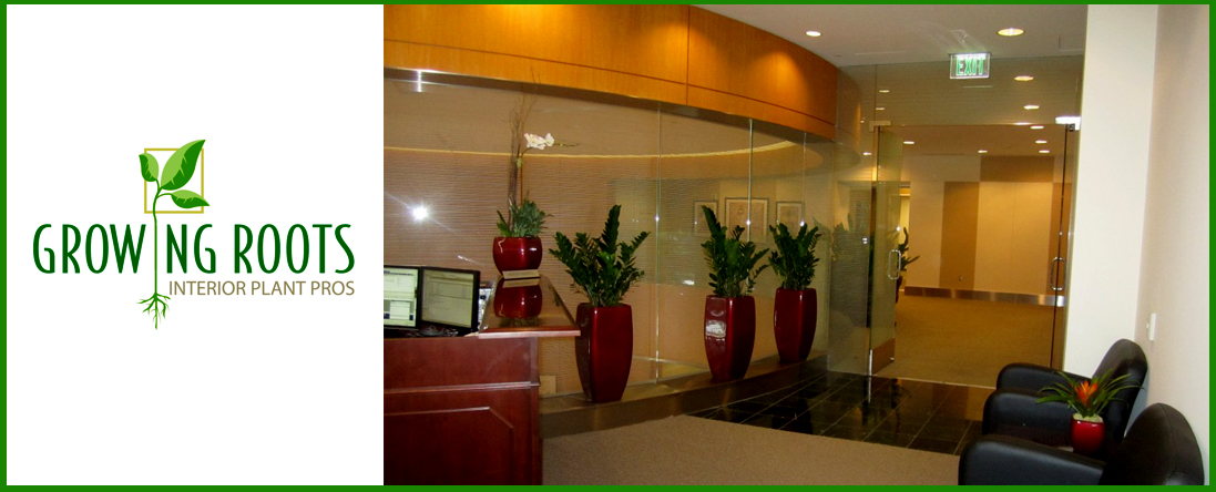 Commercial Plant Care