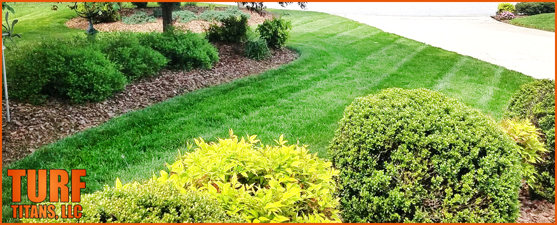 Bush Pruning Service