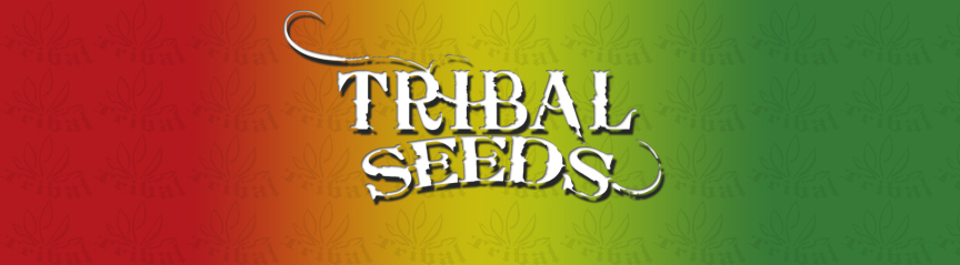 Tribal Seeds Photo