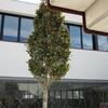 Nou edifici per a centre Cívic de Can Llong a Sabadell