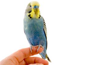 Birds (Avian Medicine)