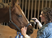 Woman brushing a brown horse