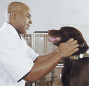 Vet check-up with brown dog
