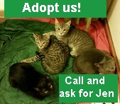 Adopt_from_Jen