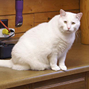 White cat sitting on the counter