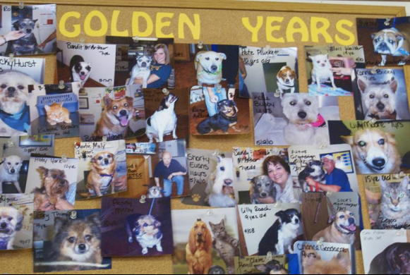 Golden Years Bulletin Board