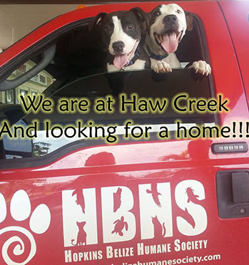 Dogs: We are at Haw Creek and looking for a home!!!