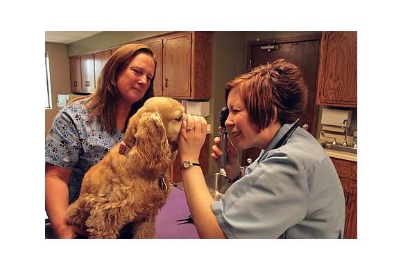 Dog receiving a checkup
