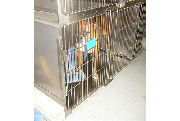 Dog in the canine boarding area