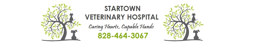 Startown Veterinary Hospital