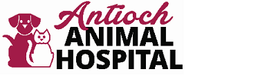 Antioch Animal Hospital