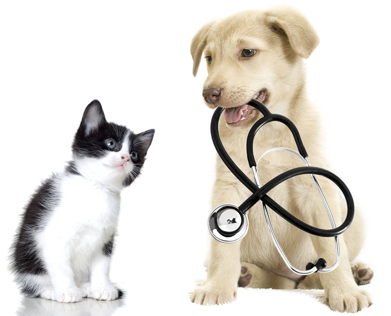 armstrong veterinary hospital