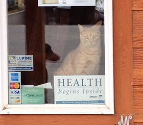 Cat inside the hospital window