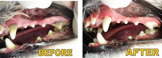 Pet Before and After Dental Cleaning