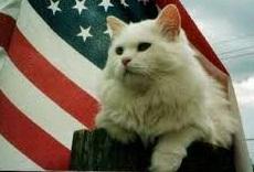 July4th-kitty