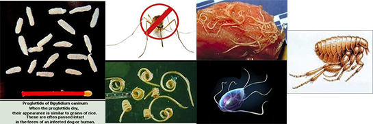 Different types of worms and parasites