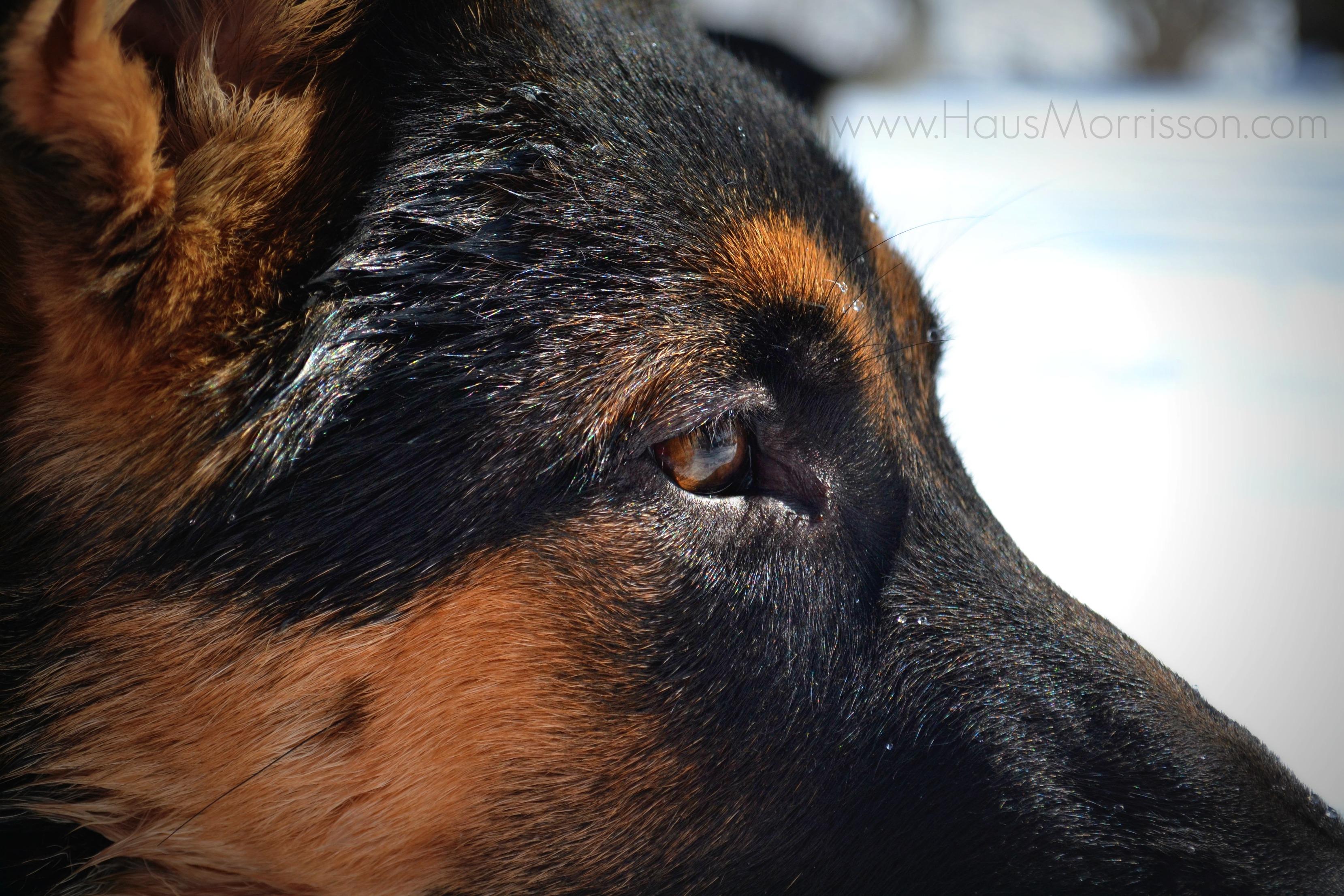 Urbana animal hospital veterinarian welcome solutioingenieria Images