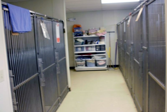 Kennel Runs for Dogs
