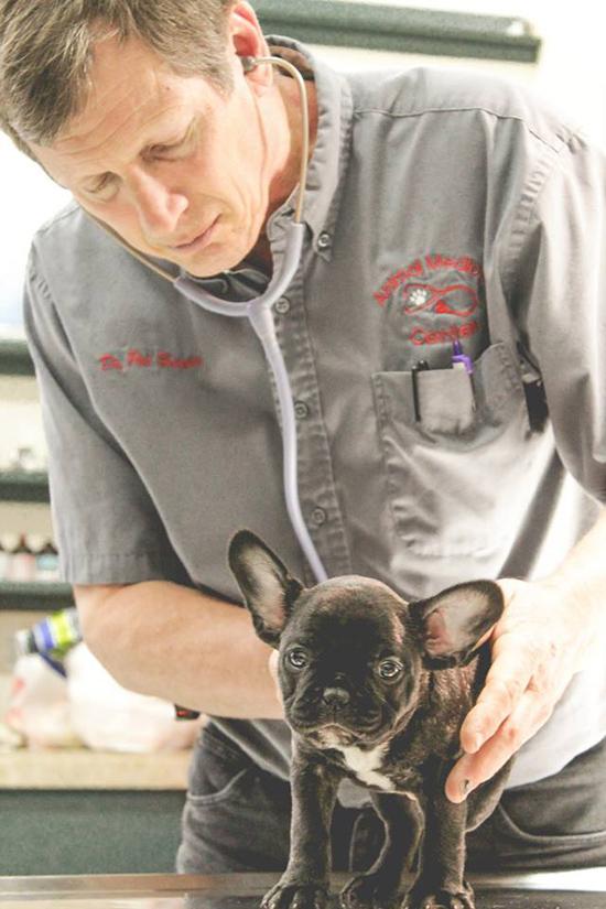 Doctor examining a dog