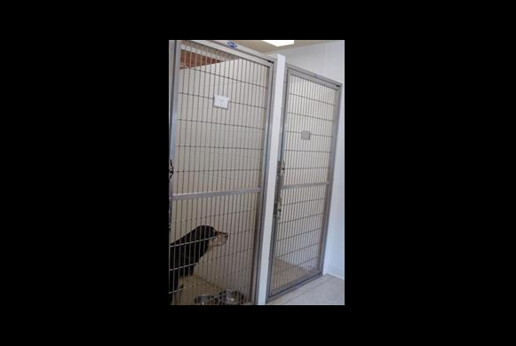 Large Dog Boarding Kennels