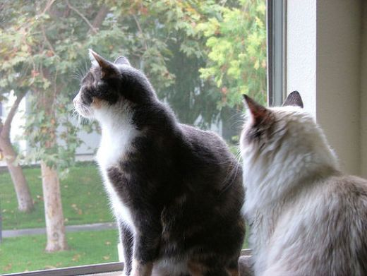 Blog post for Having an indoor cat