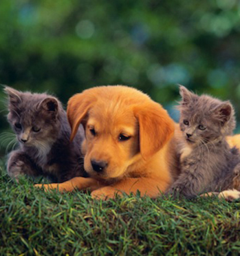 Puppy and Kittens laying in the grass