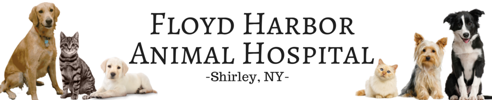 Floyd Harbor Animal Hospital Staff