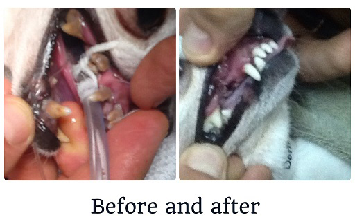 Before and after a dental cleaning