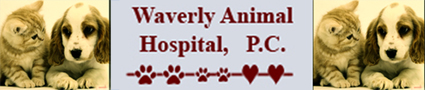 Waverly Animal Hospital, P.C.