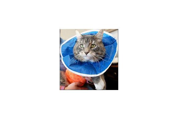 Cat in an e collar