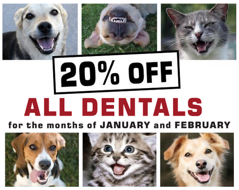Dental Discounts