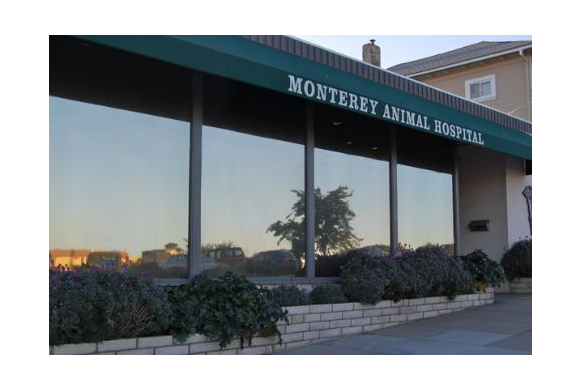 The outside of our animal hospital in Monterey, CA
