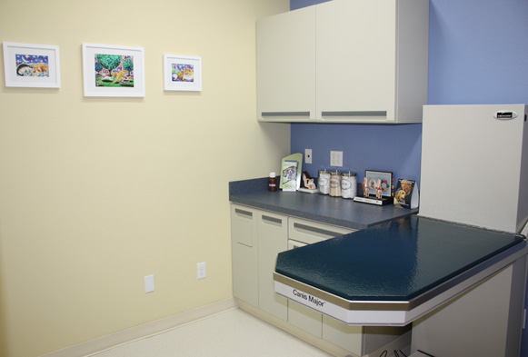 Our Canine Exam Room