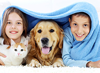 Young boy and girl with dog and cat.