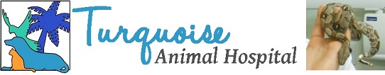 Turquoise Animal Hospital