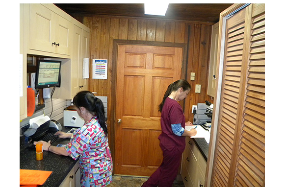 Veterinary Staff in the Laboratory