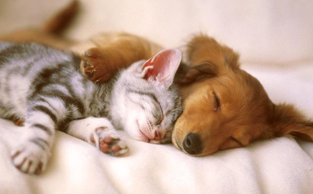 Puppy-kitten