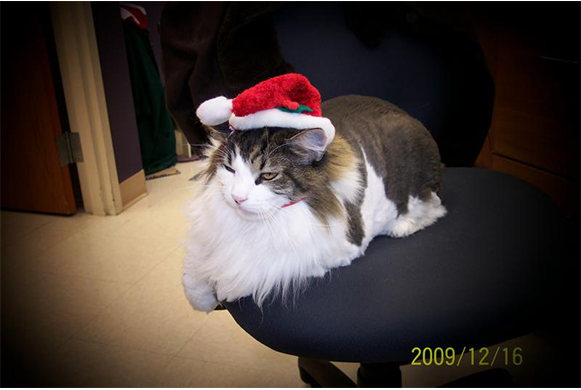 Clinic Cat sitting on a chair, wearing a Christmas hat