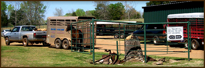 Equine and Bovine Services