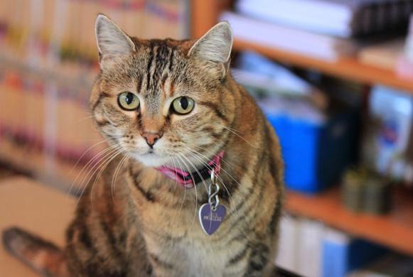 Clinic cat MaMa