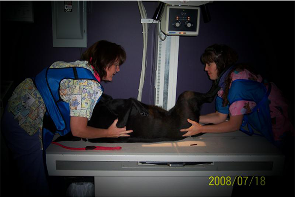 Dog receiving an x-ray