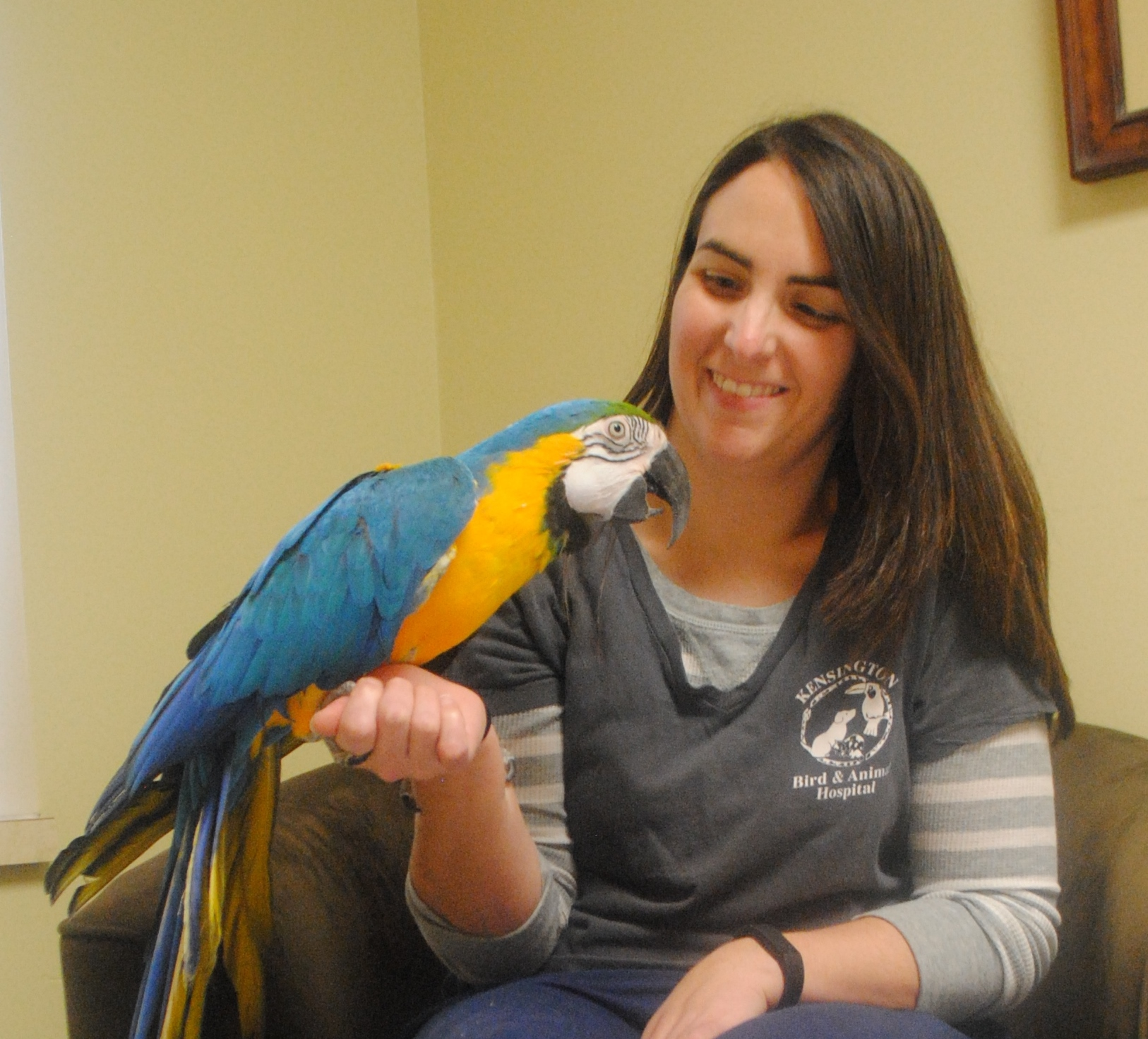 kensington bird and animal hospital veterinarians and staff michelle napolitano