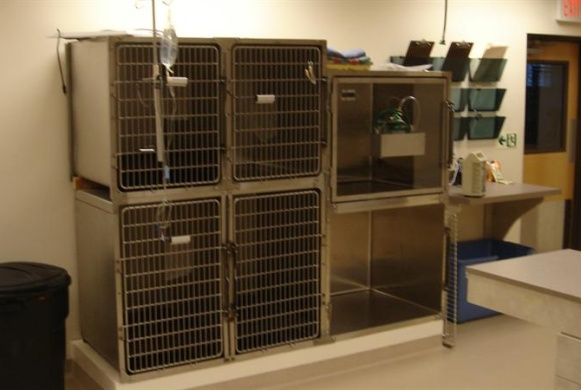 Surgical Recovery and Observation Cages