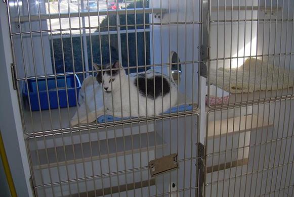Cat in the feline boarding area.