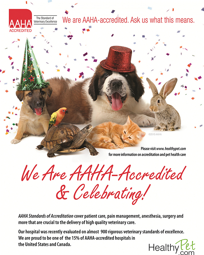 We Are AAHA-Accredited and Celebrating