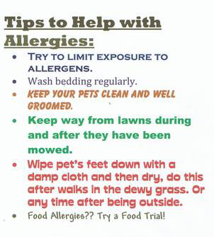Tips to Help with Allergies