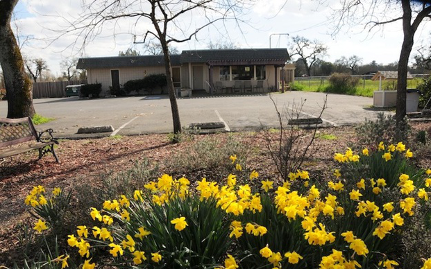 Front of the Hosptial and daffodils.