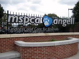 Angell Animal Medical Center sign