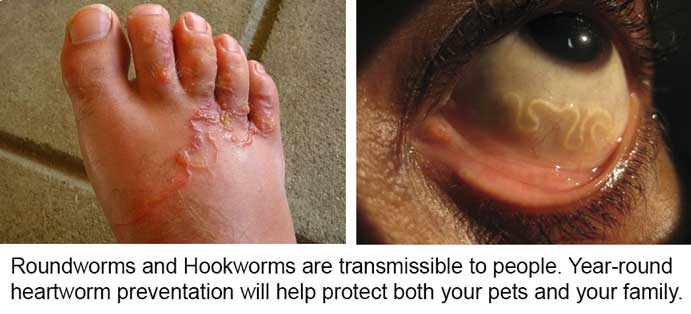 How to Treat Hookworms in Dogs
