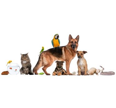 Mixed animals